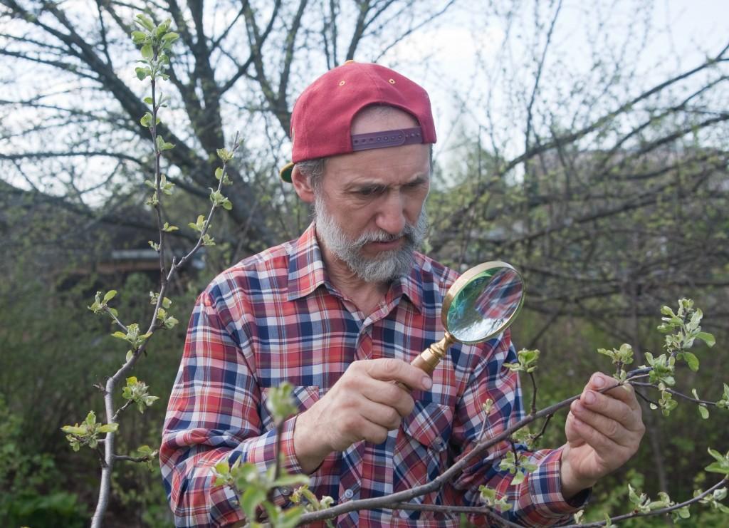 Man inspecting plant